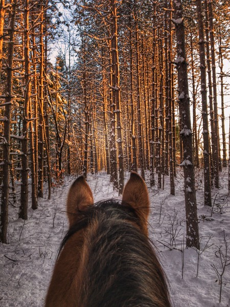 horses, Cowboy, Shinanatu, Shinanatu Farm, Winter in Maine, Snow, Stand Tall, Through the Ears