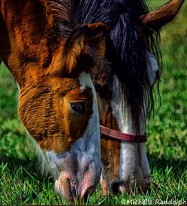 aIron Horse reg shots 947