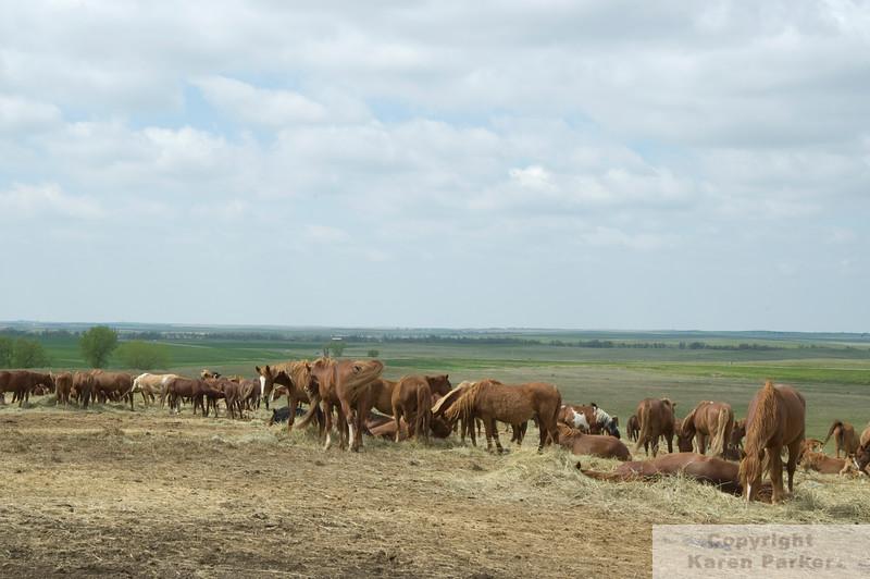 DSC_0410HighRes - The Catnip Herd