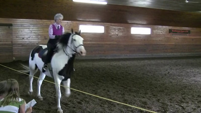School Horse Pleasure Class (2).