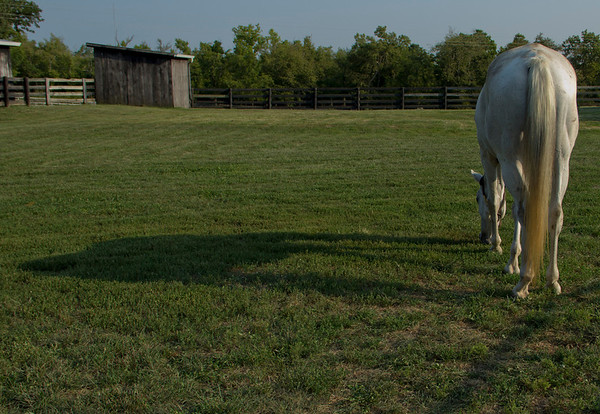 Maggie and shadow grazing!