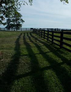 Pretty, shadowy fence line!