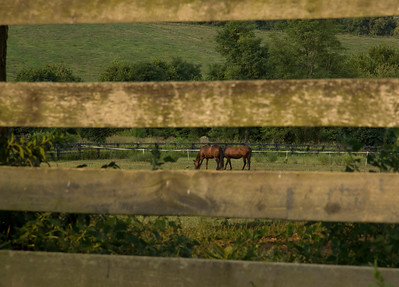 Two buddies from Maggie's field at a distance!