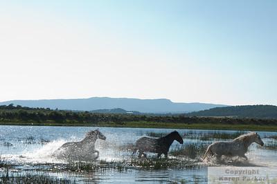 Monero Mustangs - May, 2012 and May, 2013