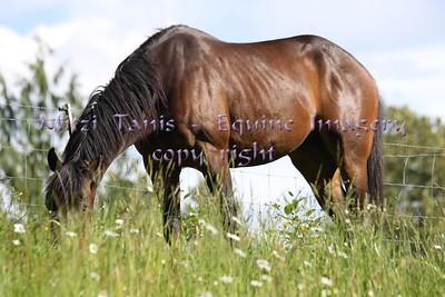 My Ponies June 2013
