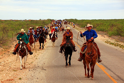 Riders beginning the cattle drive. Moving onto the road following the longhorn.