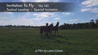 Invitation To Fly
