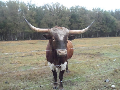 Ranch Animals & Wildlife