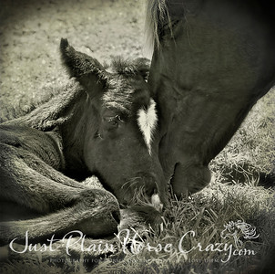 Day 2 - Resting my head on Mom while she eats grass.