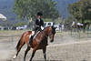San Mateo County Horsemen's Association 61st Open Western/English Horse Show 2009