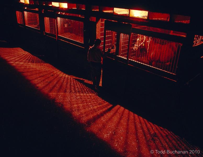 Anticipation...2 AM...Ruxer broodmare barn in February...