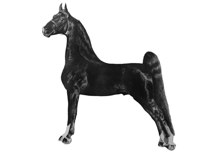 Saddlebred_p40_41.tif