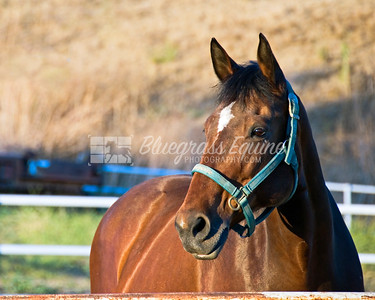 Senior Warmblood Mare in turnout