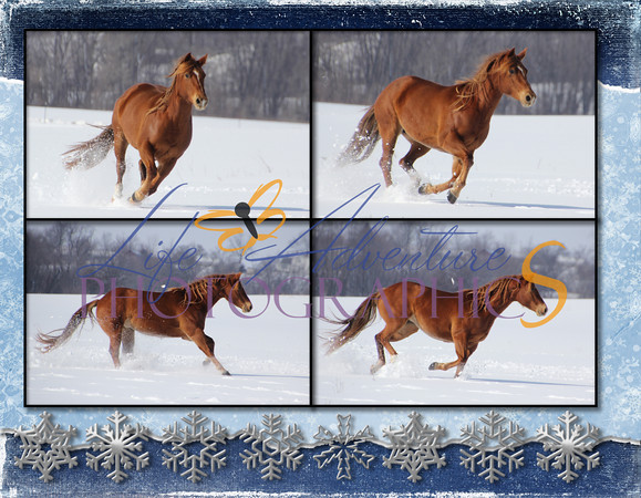 Snow Horses 2013 - Page 028