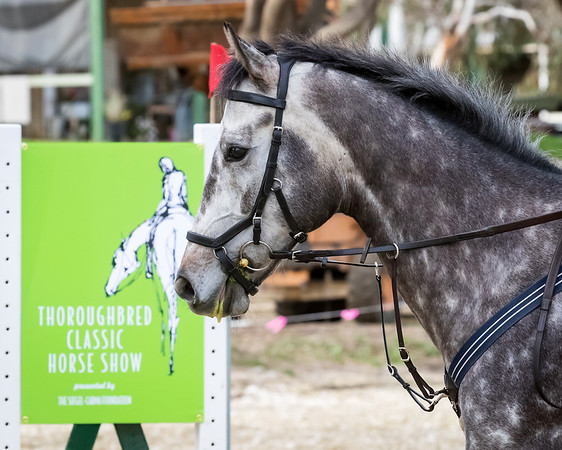 Thoroughbred Classic Horse Show 2018 - Saturday