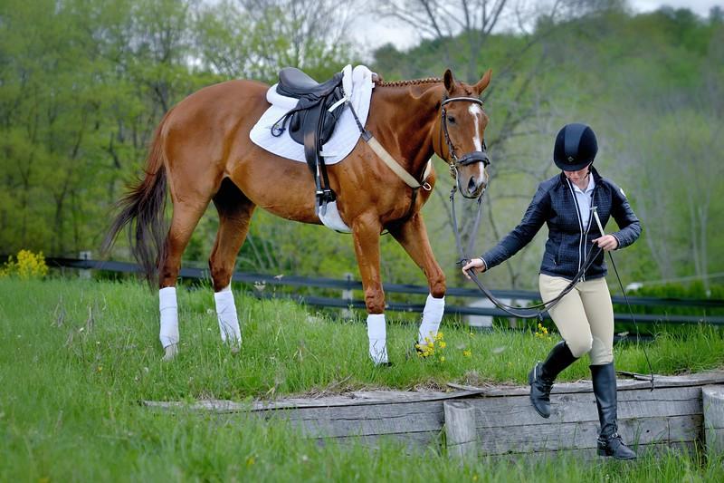 20160515-LVPC Horse-0259b