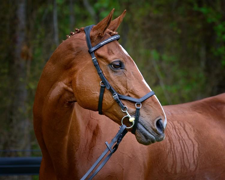 20160515-LVPC Horse-0150