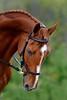 20160515-LVPC Horse-0052b