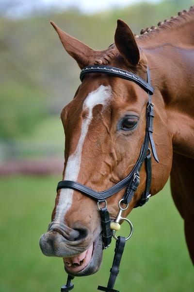 20160515-LVPC Horse-0168