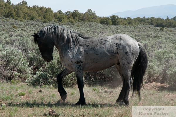 Wild Horse Mesa - May, 2012