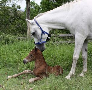 with newborn, first born Zakharii (by Simeon Sagiv).