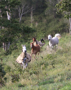 Mares & filly bolting across the hill!