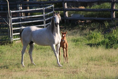 Zhivaana and 2018 filly Zalaanah.