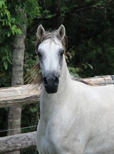 Zhivaana in April 2014 as a 4yr old.