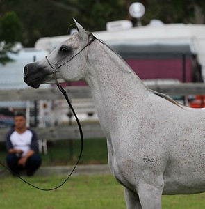Zhivaana at her first ever show in 2018.