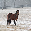 Wintertime Horse Photograph