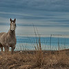 May 7 - Lonely Horse<br /> <br /> This horse was all alone in a field I was driving by.  Horses are herd animals by instinct and I am sure he was lonely.  At first, he was way off in the field, and when I stopped to take some pictures, he walked up to the fence, which resulted in better images for me.  I have this one, which is my favorite, but I will post another one tomorrow that I also like.<br /> <br /> Thanks for your comments on my black and white fence image.
