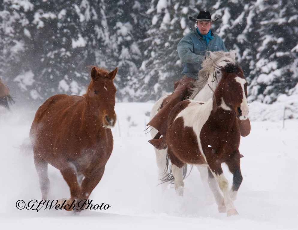 Quarter Horses on the run