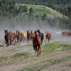 Wyoming Ranch Horses