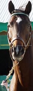 018-horse-lexington_ky-09jan05-c1-0076