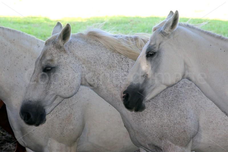 Equine Repose
