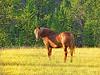 Golden Horse #2