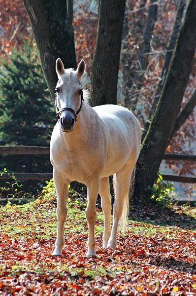 White Horse in Autumn Photo