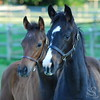 Two Horses Picture
