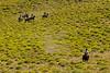 Trail Riding Patagonia