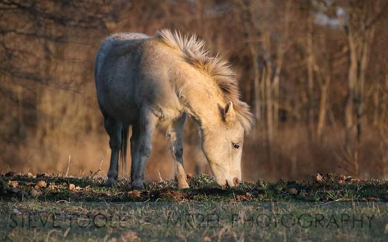 Tony the Pony