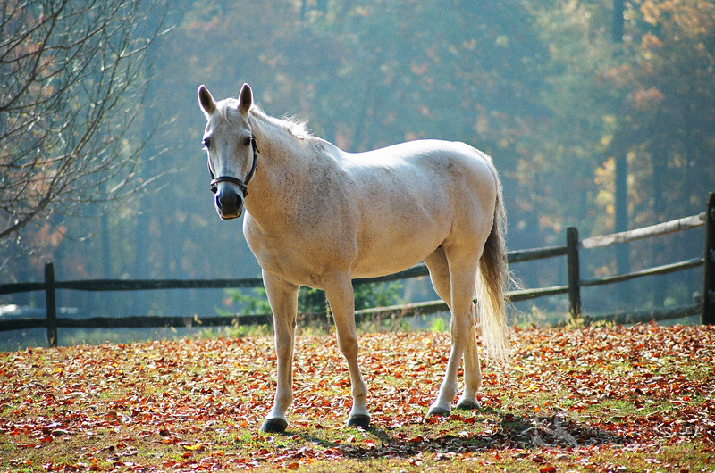 White Horse in Autumn Picture