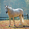White Horse in Autumn