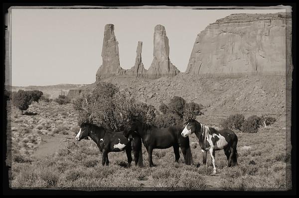 Three Sisters, Three Mustangs