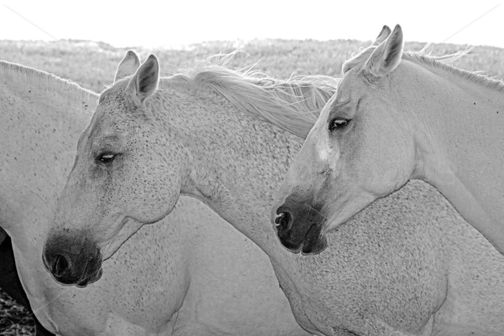 Equine Dreams