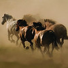 Black Butte Ranch Stables horses on their way to work.  The power of the herd lets their spirit run wild.