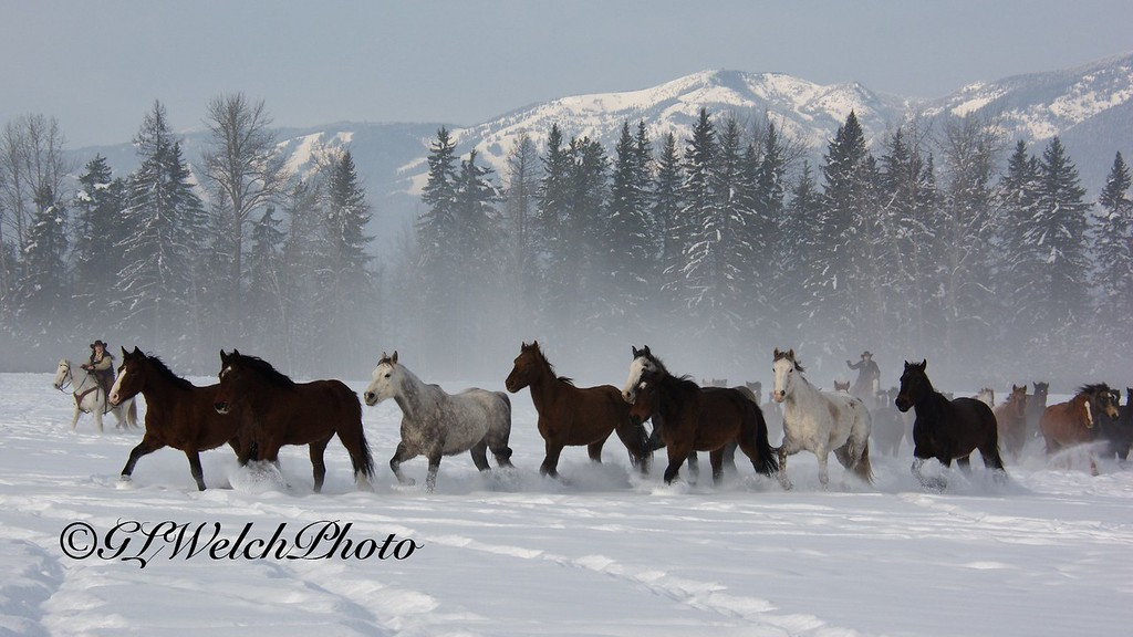 Winter Horse Roundup