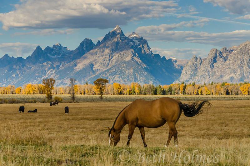 Autumn Horse