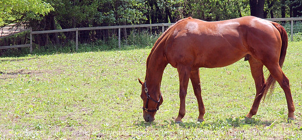 015-horse-dsm-28may03-c1-a