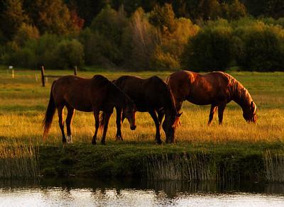 horses-in-sunlight-060506-k