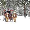 BBR-Holiday-carriage ride__KateThomasKeown_dsc7553rt